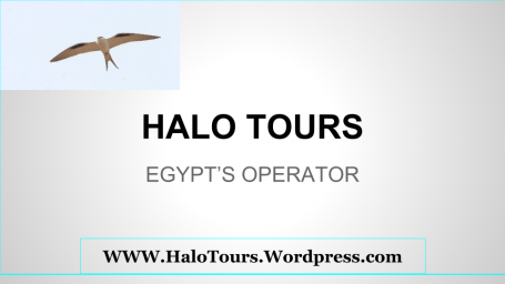 HALO TOURS.png