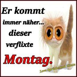 FB_IMG_1457294926727.jpg
